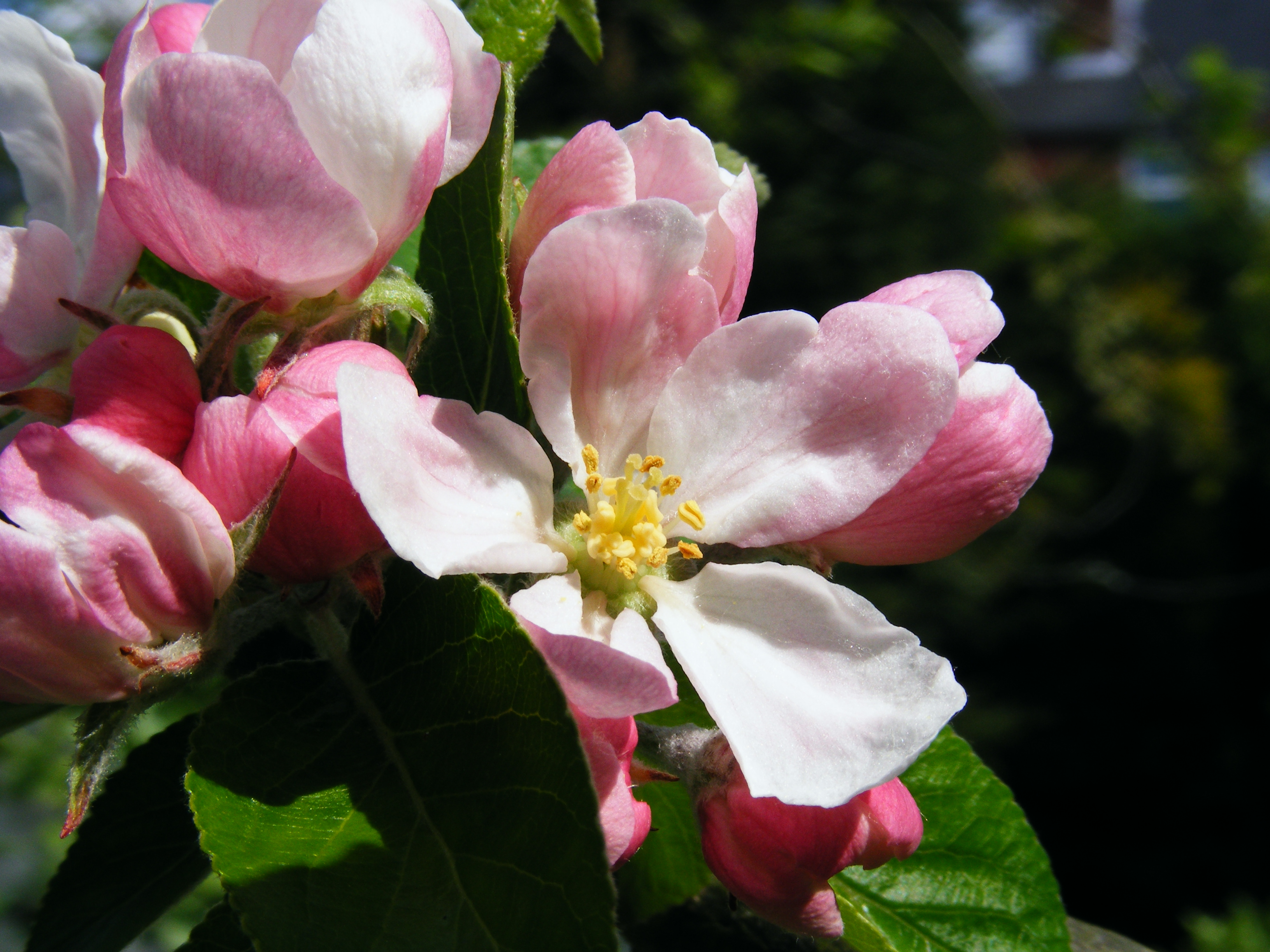 The Dos and Don'ts for Apple Blossom 2015