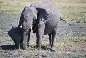 An elephant and her child.